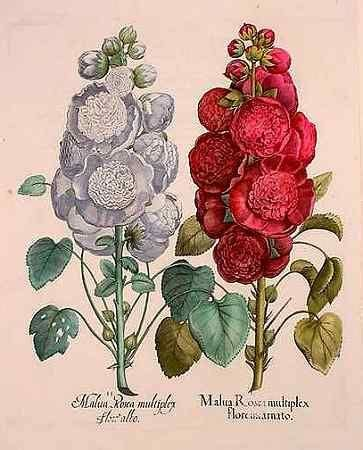 hollyhock tattoo symbol for ambition tattoos and