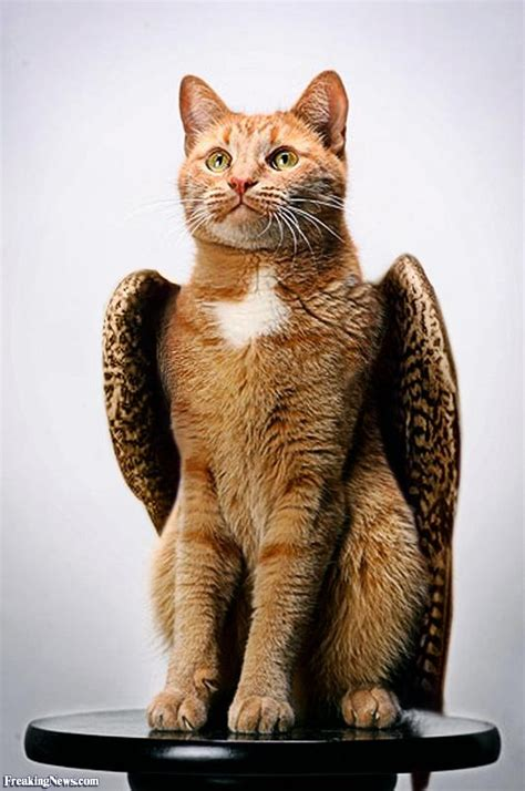 Cat With Stool by Cat With Wings On A Stool Pictures Freaking News