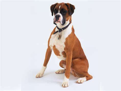royal puppy pets3000 royal canin food