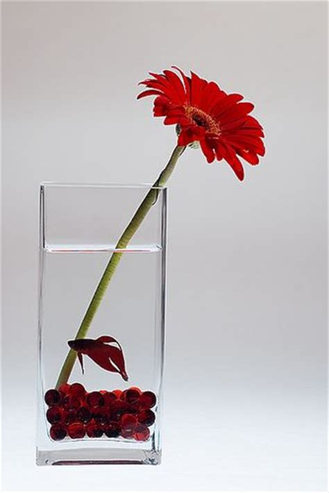 thinkin of home gerber daisy love thinking about using this idea for my wedding i d use