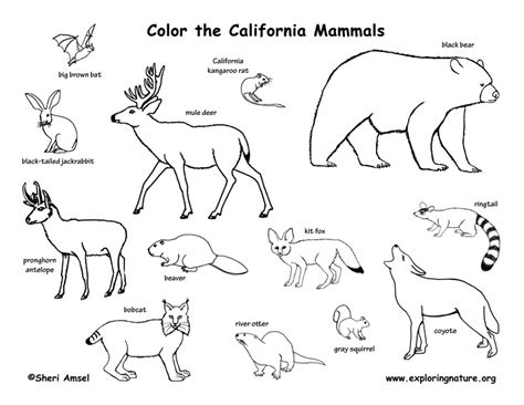 Mammals Coloring Pages california