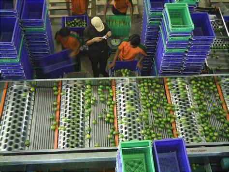 Fruit Basket Multipurpose Basket Tempat Buah Dan Sayur Sj 240 X jual beli teether apel ange fruit teether apple jual beli apple chips cup snack