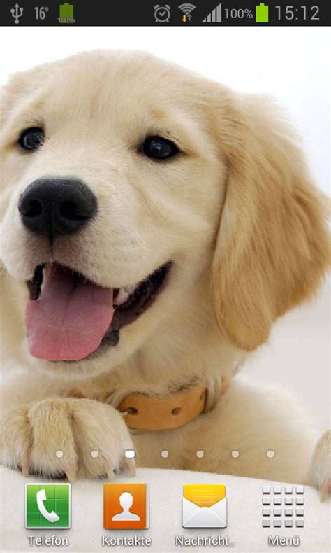 puppies live wallpaper puppies dogs live wallpaper android apps on play