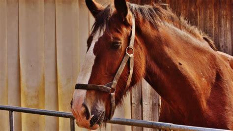 alimenti per cavalli alimenti per cavalli alimenti per cavalli alimenti per
