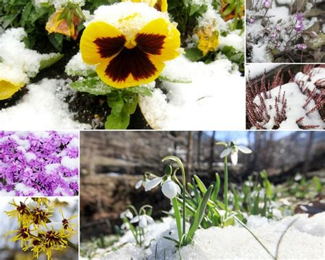 flowers that bloom only in winter 9 beautiful flowers that bloom in winter a green