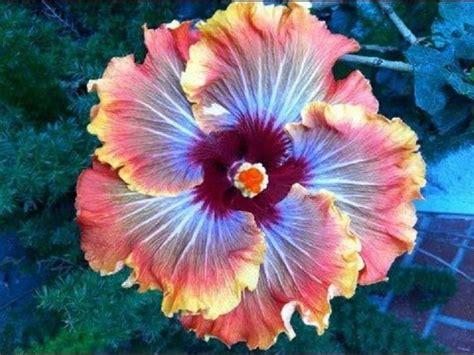 imagenes flores impresionantes m 225 s de 25 ideas incre 237 bles sobre flores hermosas del mundo