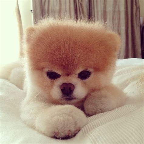 Le Nounours 1605 by Adorable Animals Baby Fluffy Nose