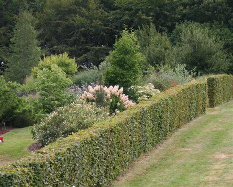 Haie Devant Maison by Les Conseils De Jardin De Vavou Articles Sur Le