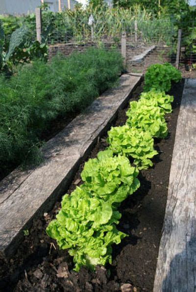 10 Best Images About Clay Soil Gardening On Pinterest Topsoil For Vegetable Garden