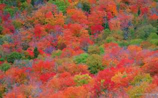 fall color fall foliage wallpapers for desktop wallpaper cave