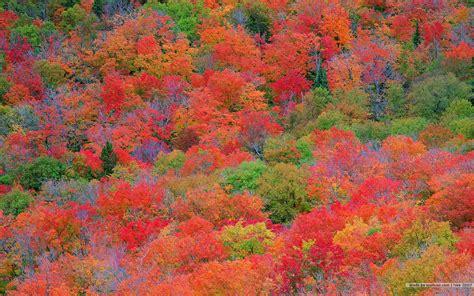 autumn colors fall colors wallpaper backgrounds wallpaper cave