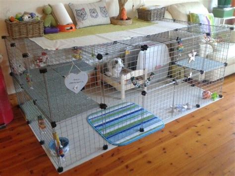 best rabbit bedding best 25 shaved guinea pigs ideas on pinterest cages for