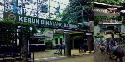 wallpaper di bandung kebun binatang bandung tempat wisata foto gambar wallpaper