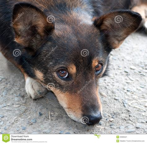 your purebred puppy portrait of a not purebred stock image image 29385521