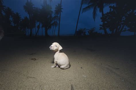 the abandoned puppy series 1 humane society shepherding rescue of stray dogs in