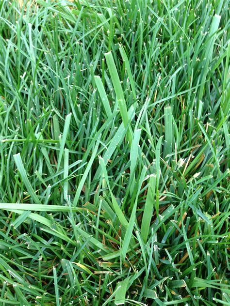 garden grass types what type of grass is this and how do i get rid of it