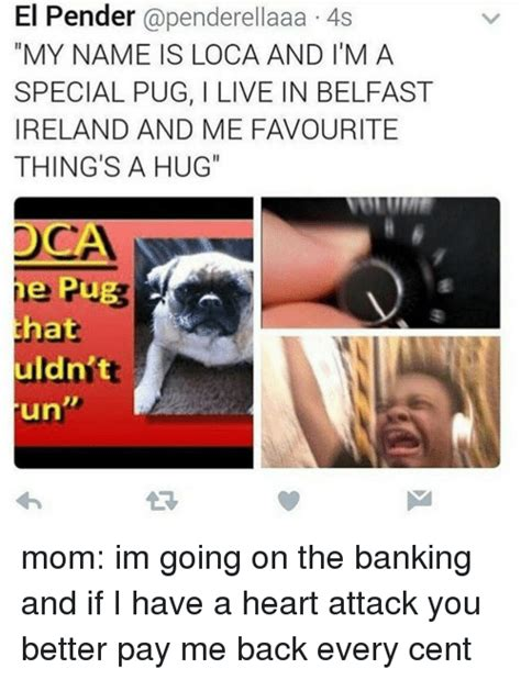 loca the special pug pugs memes of 2016 on sizzle cars