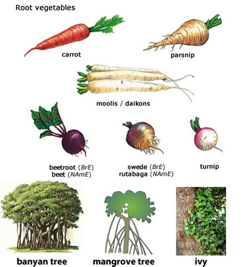 exles of root vegetables roots different types of and different types on