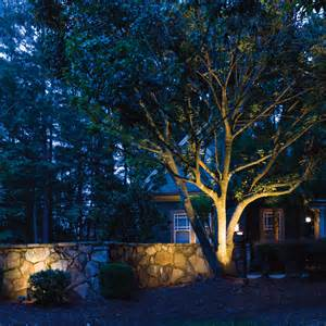 landscape tree lighting accent lighting