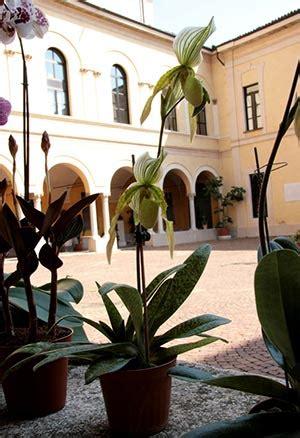 il giorno di pavia mostra di pavia il giorno dopo orchids it