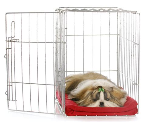 best way to crate a puppy best crate covers the best ways to make your s den snug
