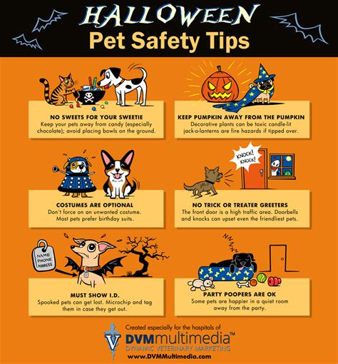 pet and photography for everybody secrets from a pro books pet safety tips chagne living