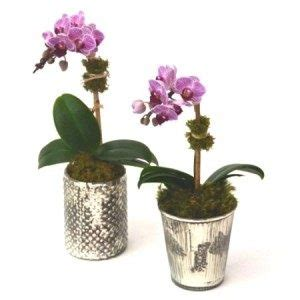 100 facts about orchids 6 incredible flowers that birthday flowers nyc designer florist high end