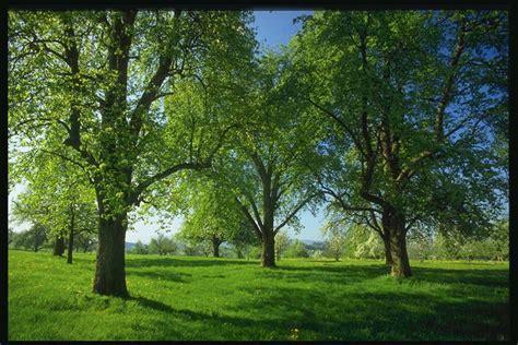 gambar pemandangan alam yang indah aldio