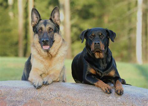 aggressive list aggressive breeds list