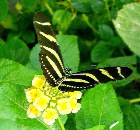 imagenes de mariposas negras grandes banco de imagenes y fotos gratis octubre 2014