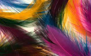 colorful feather beautiful feathers wallpapers and pictures one hd