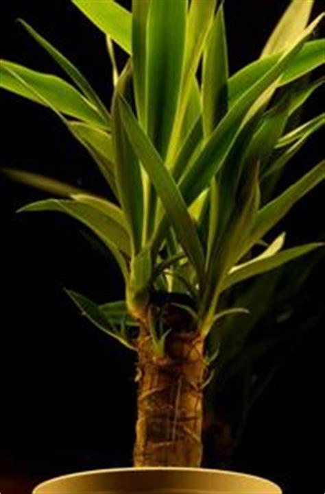 les meilleures plantes d int 233 rieur low light article