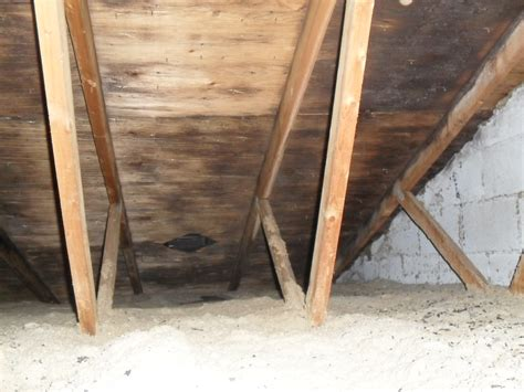mold in basement removal cost basement mold removal cost image mag
