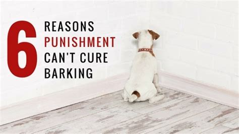 puppy screaming in crate the 6 reasons can t stop barking thedogtrainingsecret