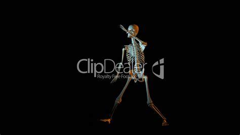 dancing skeleton animation royalty  video  stock