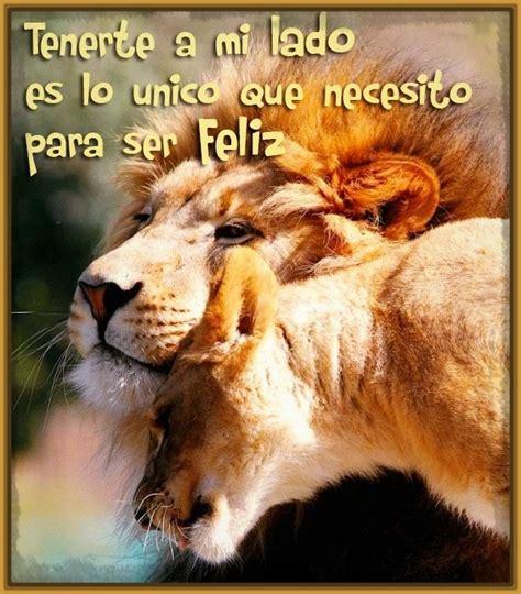 imagenes de leones lindas ver fotos de leones con frases bonitas archivos imagenes