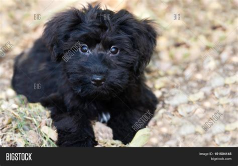 black fluffy puppy puppy is an adorable fluffy black puppy outdoors looking as as an