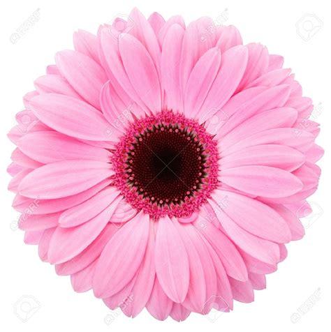 Floral Pink top pink flower picture 2459 hdwarena