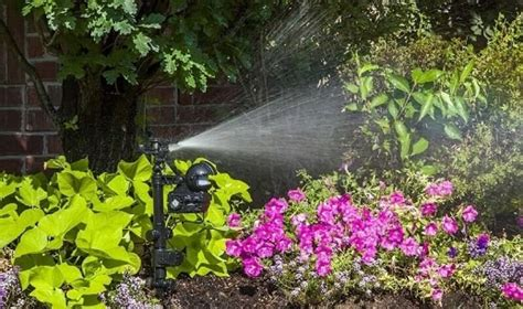 how to keep cats out of flower beds how to keep cats out of flower bed best cat repellent