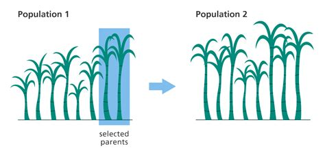 breed height what is selective facts yourgenome org