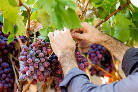 Knob Hill Winery by Knob Winery More Than Award Winning Wines