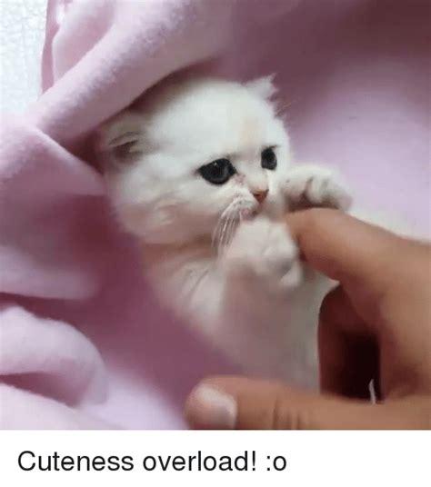 Cute Overload Meme - cuteness overload o meme on sizzle