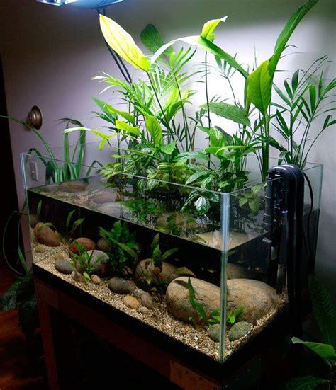 design aquarium unik 50 gallon planted riparium cool plants pinterest