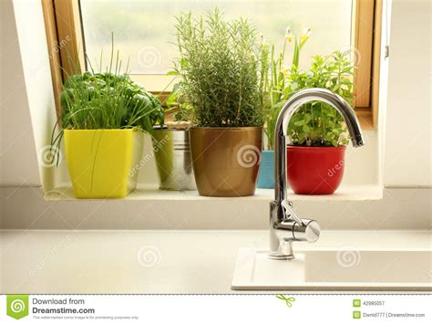grow herbs in kitchen herbs growing in kitchen stock photo image 42985057