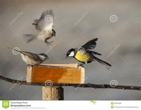 birds eating from bird feeder royalty free stock images