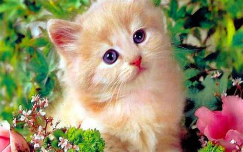 wallpaper whatsapp cats 211 cute dp best cute dp images for girls boys in hindi