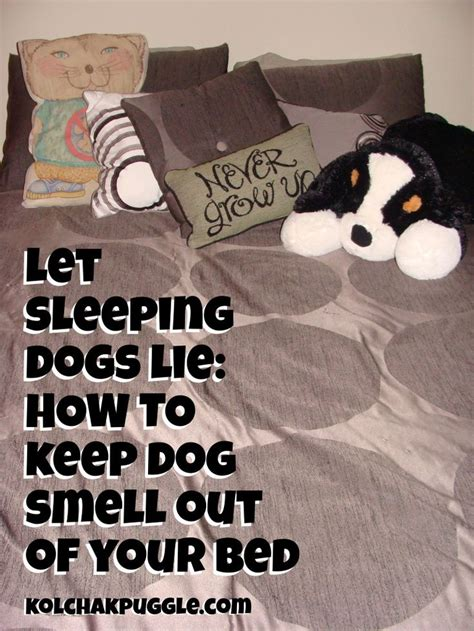Let Sleeping Dogs Lie How To Keep Dog Smell Out Of Your Bed Dog Smells Dogs And Beds