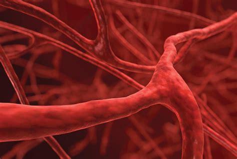 dilatazione vasi sanguigni come favorire il rilassamento dei vasi sanguigni in modo