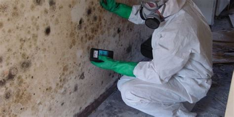 mold inspection healthy home mold inspection lowest rate guarantee