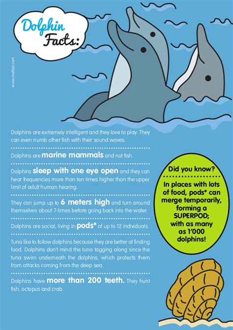 dolphins a kid s book of cool images and amazing facts about dolphins nature books for children series volume 5 books dolphin facts